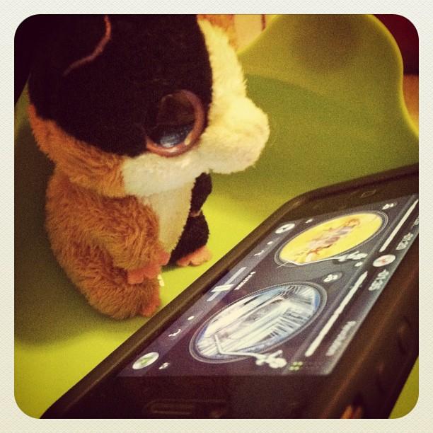 DJ nibbles